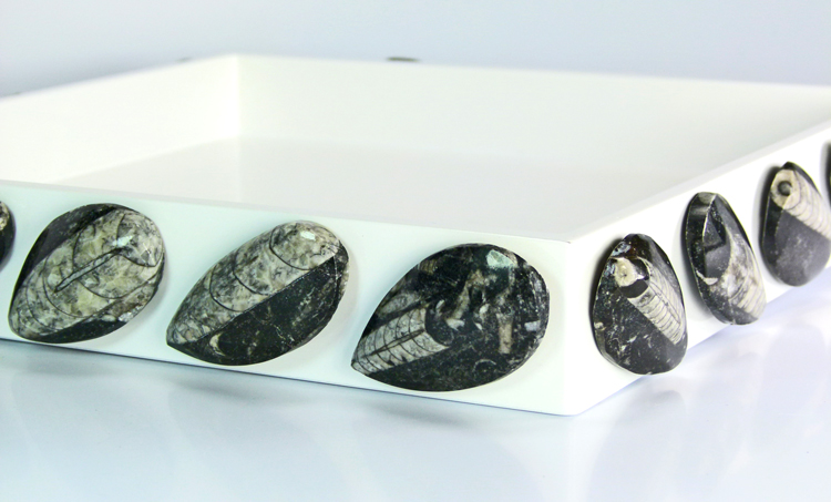 Hayes Hamilton Collection - White Lacquer tray with Orthocaseras Fossils